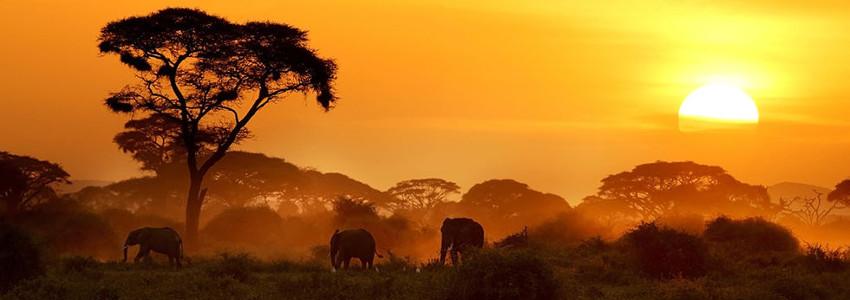 Кенія відпочинок