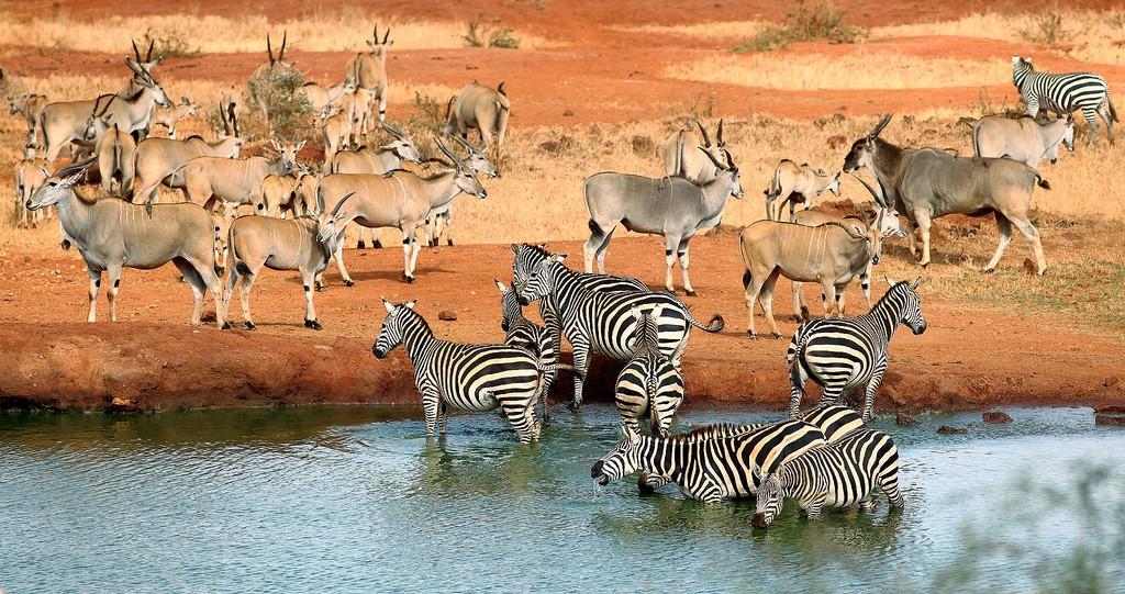 Кенія курорти